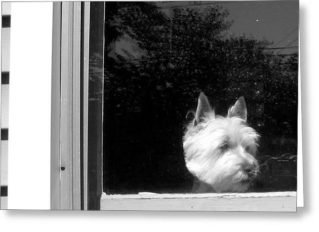 Puppies Photographs Greeting Cards - Waiting Greeting Card by Gerard Yates