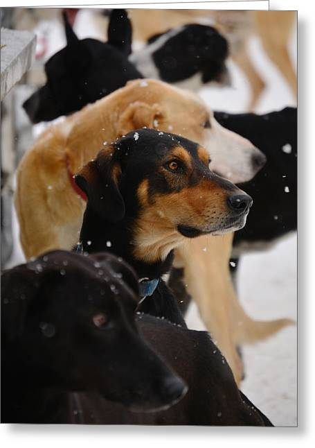 Puppies Photographs Greeting Cards - Waiting Greeting Card by Kaitlynn Tidwell