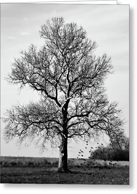 Bare Trees Greeting Cards - Waiting Greeting Card by Lana Trussell
