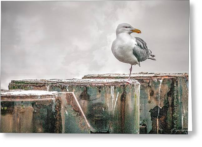 Kingston Greeting Cards - Waiting On The Ferry Greeting Card by Gary Harper