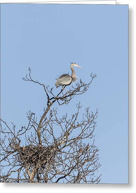 Birds In A Nest Greeting Cards - Waiting Patiently Greeting Card by Thomas Young