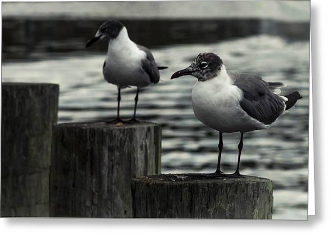 Beach Photography Greeting Cards - Waiting Seagulls 2 Greeting Card by Debra Forand