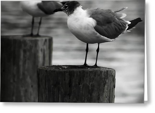 Beach Photography Greeting Cards - Waiting Seagulls  Greeting Card by Debra Forand