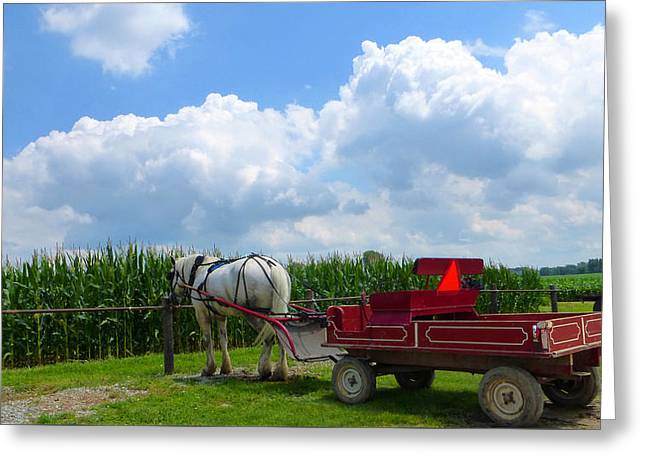 Amish Community Greeting Cards - Waiting Greeting Card by Tina M Wenger