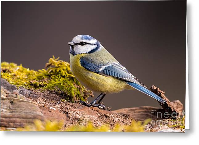 Wingtips Greeting Cards - Waiting Greeting Card by Torbjorn Swenelius