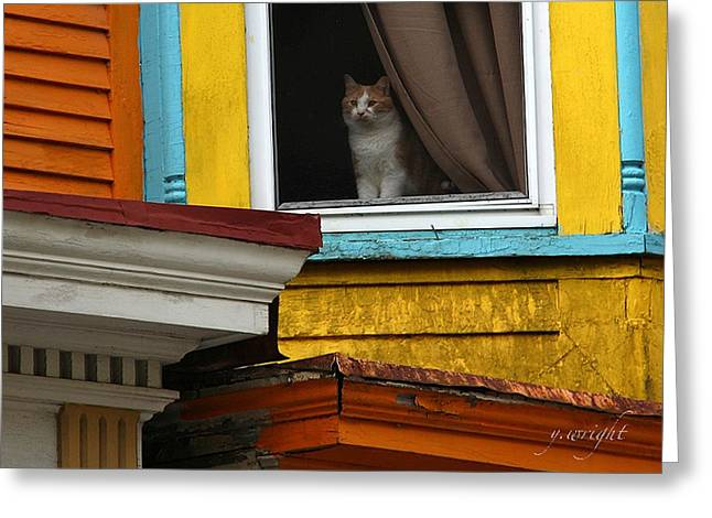 Waiting... Greeting Card by Yvonne Wright