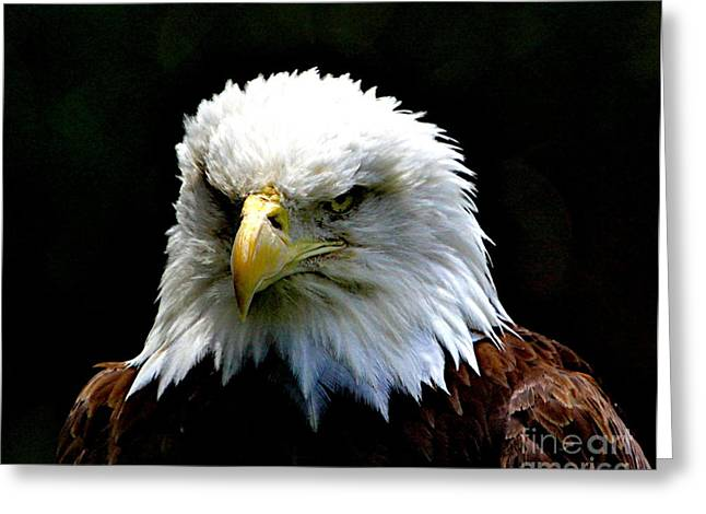 Eagles Mixed Media Greeting Cards - Wake up America Greeting Card by Robert Pearson
