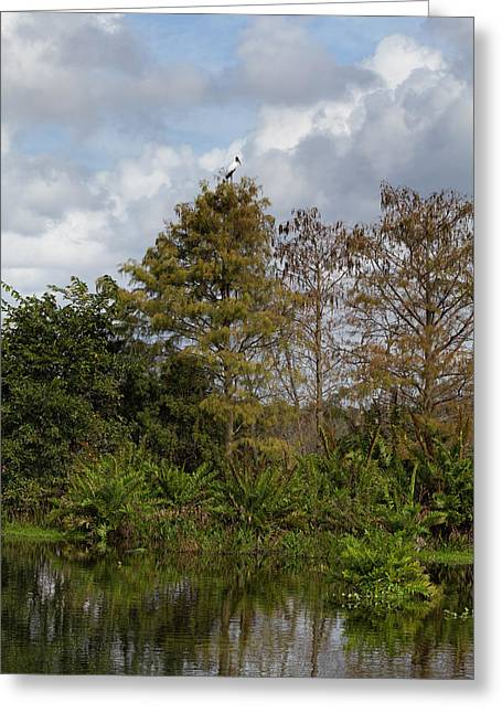 Kim Photographs Greeting Cards - Wakodahatchee Wetlands Greeting Card by Kim Hojnacki