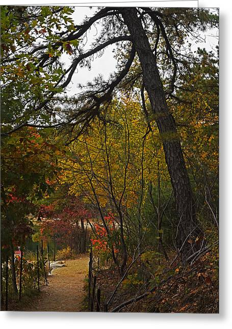 Walden Pond Path Into The Forest 2 Greeting Card by Toby McGuire