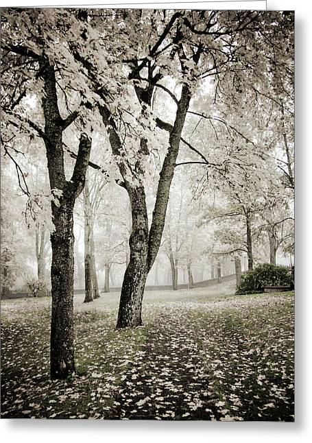 Soft Colour Greeting Cards - Walk in the Park Encore  Greeting Card by Maggie Terlecki