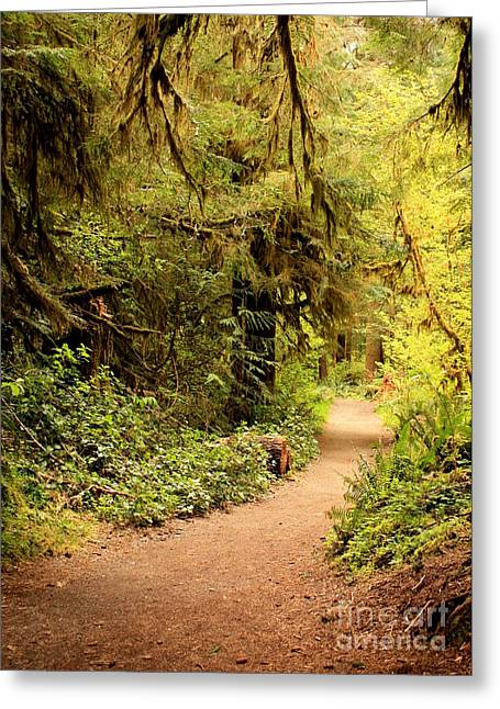 Moss Green Photographs Greeting Cards - Walk Into the Forest Greeting Card by Carol Groenen