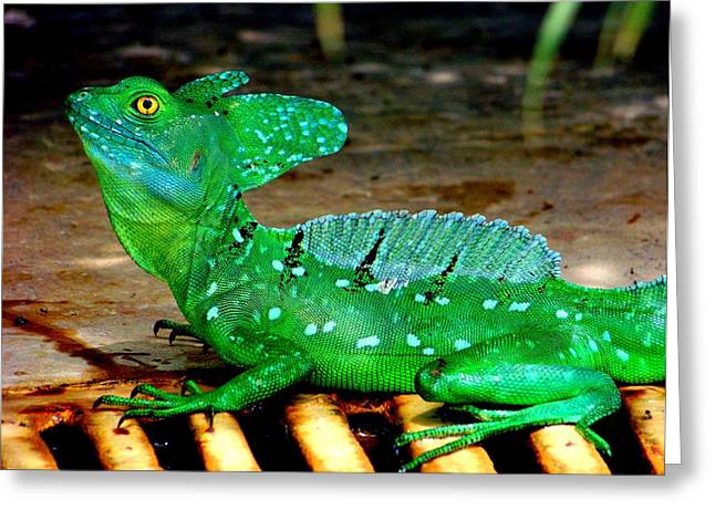 Rican Greeting Cards - Walk on Water Greeting Card by Karen Wiles
