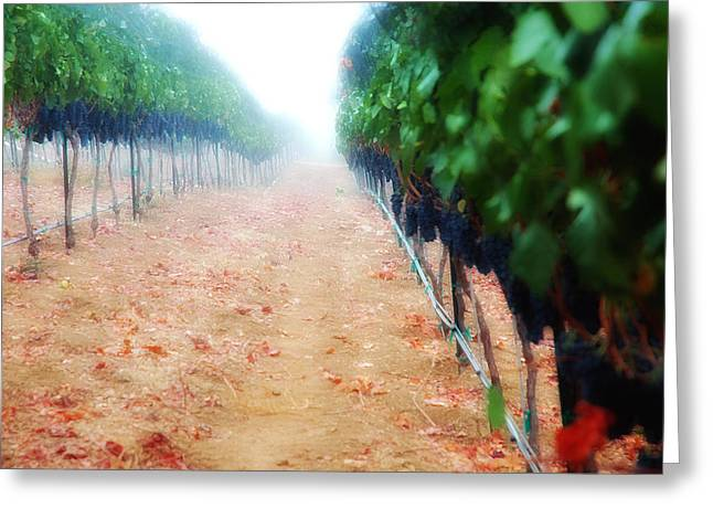 Syrah Photographs Greeting Cards - Walk the line Greeting Card by Kristine Ellison