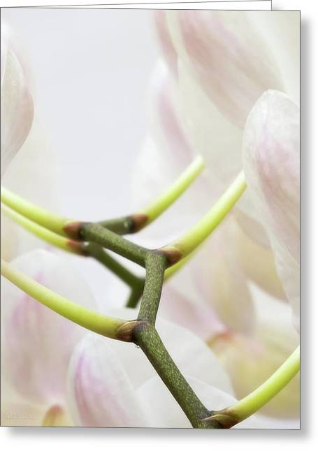 Walk The Orchid Greeting Card by Wim Lanclus