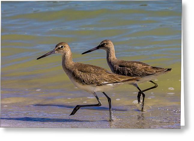 Sea Bird Greeting Cards - Walk Together Stay Together Greeting Card by Marvin Spates
