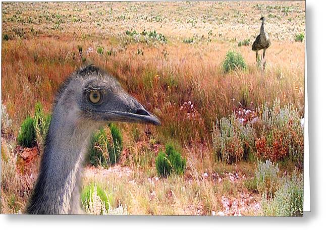 Emu Greeting Cards - Walkabout Greeting Card by Holly Kempe