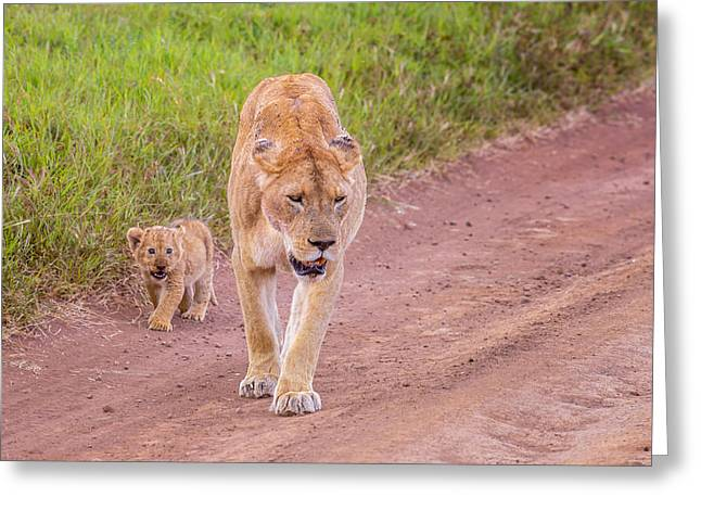 Lioness Greeting Cards - Walking After You Greeting Card by Liran Eisenberg