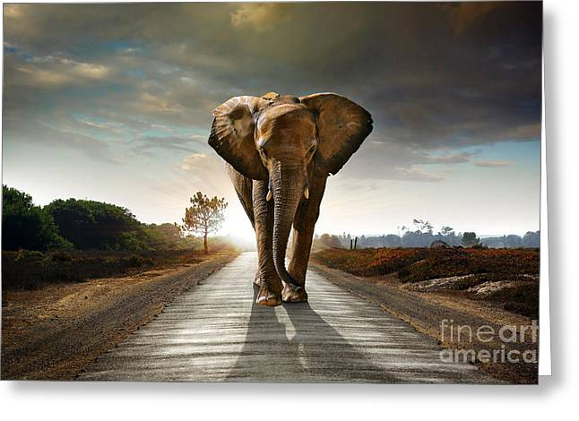 Savannahs Greeting Cards - Walking Elephant Greeting Card by Carlos Caetano