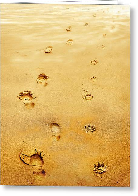 Dog Beach Print Greeting Cards - Walking the Dog Greeting Card by Mal Bray