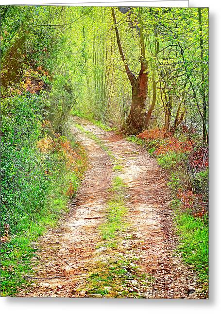 Walkway In Secluded Deciduous Forest Greeting Card by Anna Omelchenko