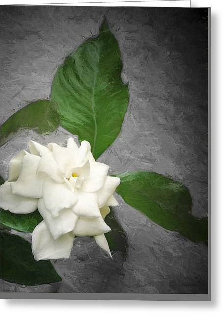 Gardenia Greeting Cards - Wall Flower Greeting Card by Carolyn Marshall