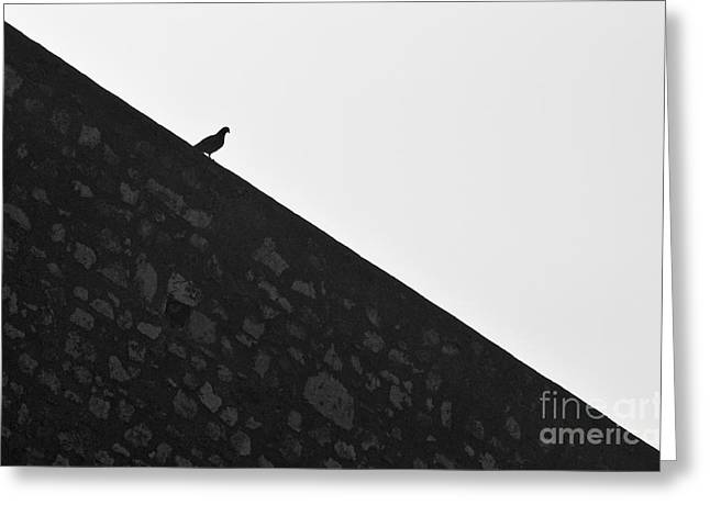 White Greeting Cards - Wall Surfin Bird Greeting Card by Angelo DeVal