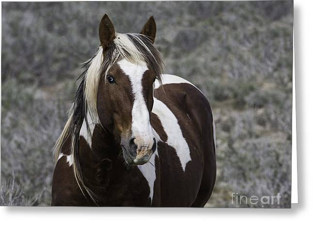 Wanderer Greeting Cards - Wanderers Portrait Greeting Card by Carol Walker