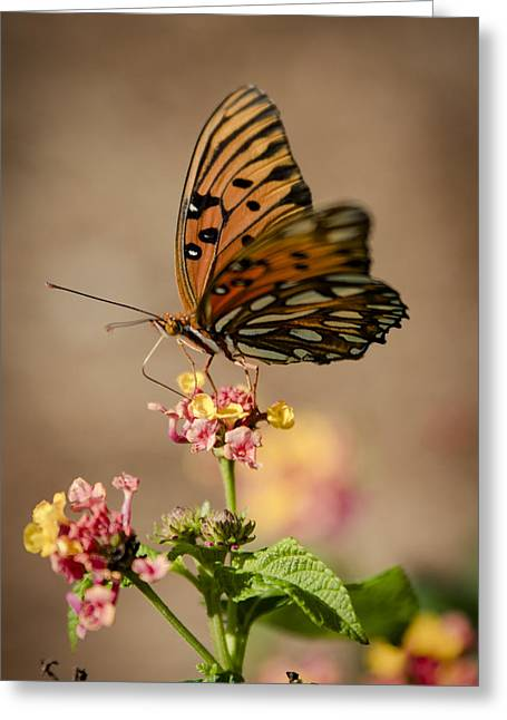 Common Tiger Butterfly Greeting Cards - Wandering Monarch Greeting Card by Alicia Collins