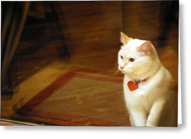Cat Reflection Greeting Cards - Wanting In To Your Heart Greeting Card by Peter  McIntosh