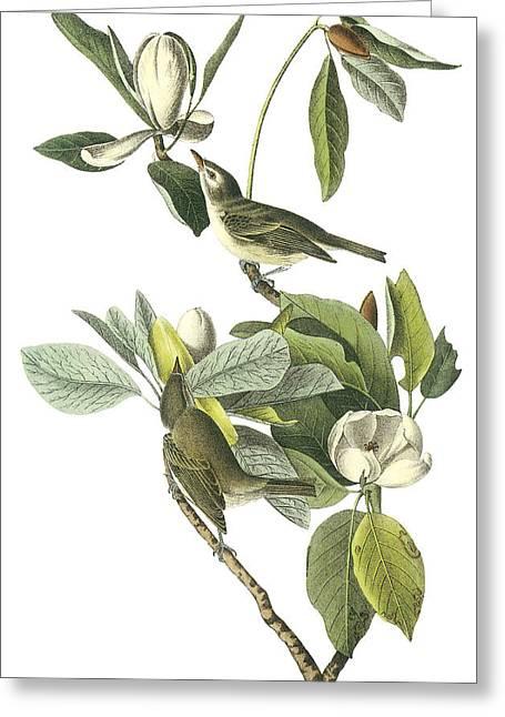 Audubon Greeting Cards - Warbling Vireo Greeting Card by John James Audubon