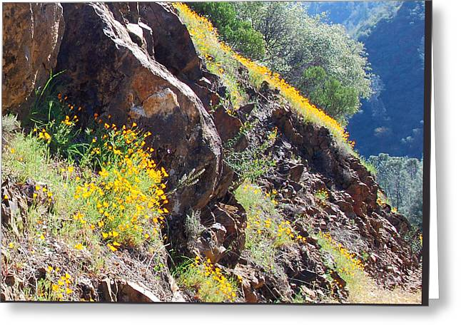 Abstract California Poppies Photographs Greeting Cards - Wards Ferry Poppies Greeting Card by DJ Lanzendorfer