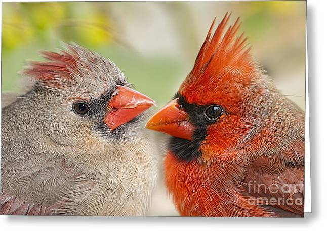 Female Northern Cardinal Greeting Cards - Warm Fluffy Feelings Greeting Card by Bonnie Barry
