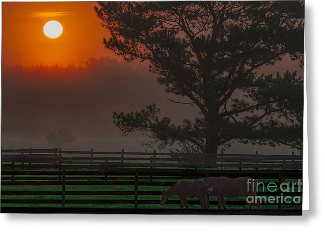 Glowing Tapestries - Textiles Greeting Cards - Warm Sunrise Greeting Card by James Hennis