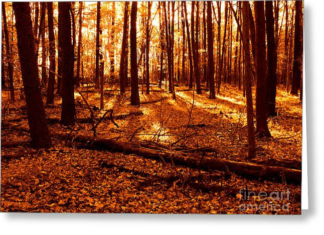 Warm Light Greeting Cards - Warm Woods Greeting Card by Olivier Le Queinec