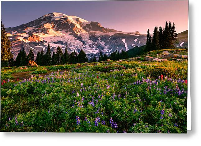 Paradise Meadow Greeting Cards - Warming Up in Paradise Greeting Card by Dan Mihai