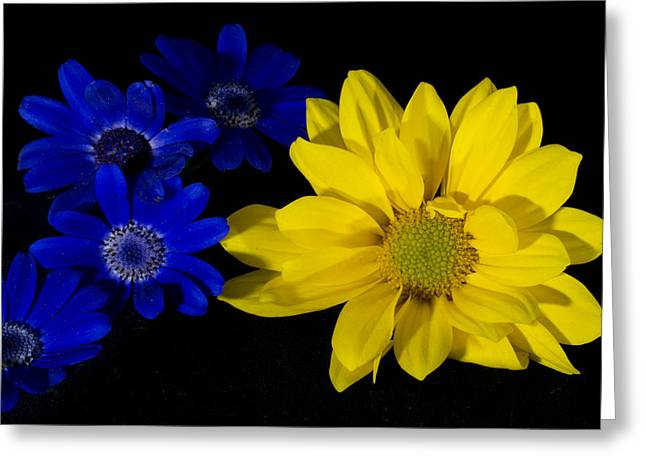 Senetti Photographs Greeting Cards - Warmth in Numbers Greeting Card by Glen  Towler