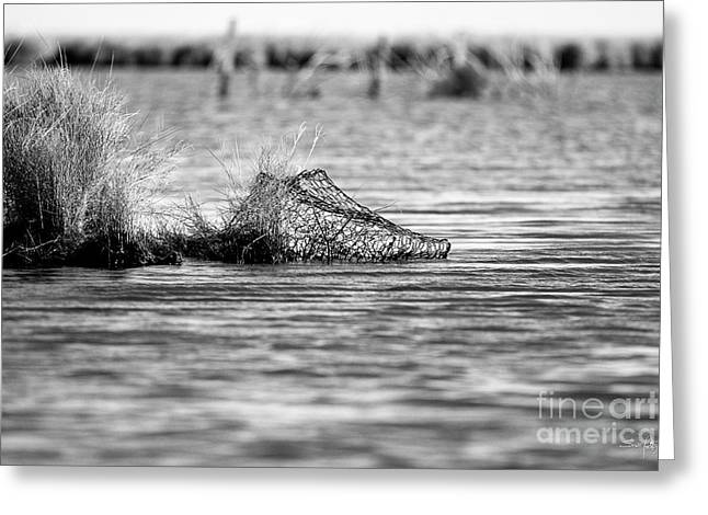 Crab Traps Greeting Cards - Washed Ashore Greeting Card by Scott Pellegrin