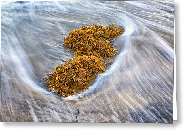 Kelp Greeting Cards - Washed Up Greeting Card by Joseph S Giacalone