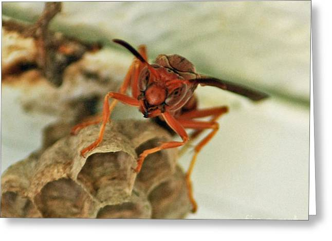 Mud Nest Greeting Cards - Wasp Cameo Greeting Card by Terri Mills