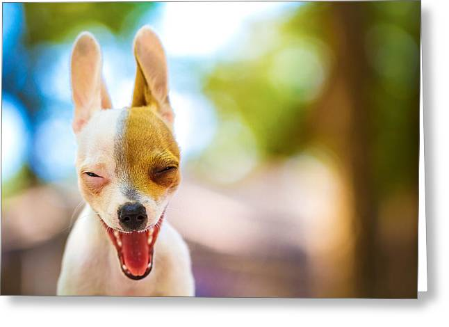 Best Sellers -  - Puppies Photographs Greeting Cards - Wassup? Greeting Card by TC Morgan