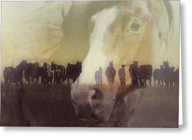 Watch Over The Last Run At Dusk Greeting Card by Amanda Smith
