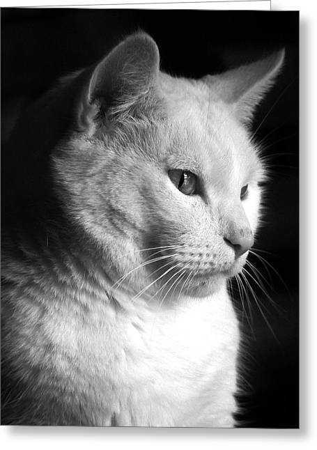 Serous Greeting Cards - Watchful Greeting Card by Bob Orsillo