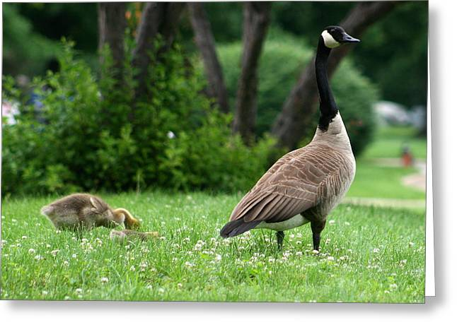 Best Sellers -  - Mother Goose Greeting Cards - Watchful Eye Greeting Card by David Dunham