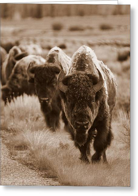 Wyoming Wildlife Greeting Cards - Watchful Eyes Greeting Card by Bill Keiran