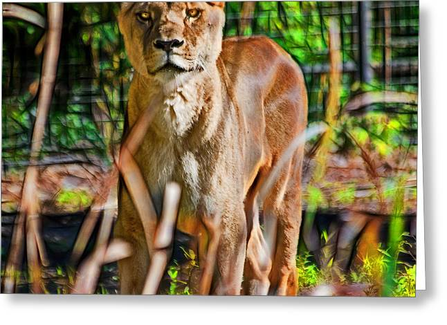 Lioness Greeting Cards - Watchful Lioness Greeting Card by Miroslava Jurcik