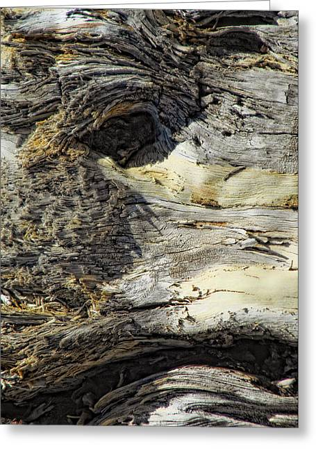 Wood Sculpture Greeting Cards - Watching Greeting Card by Donna Blackhall
