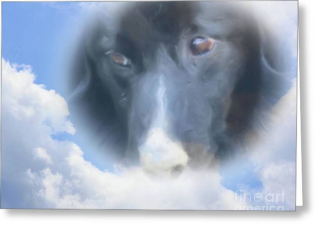 Collie Mixed Media Greeting Cards - Watching From Above Greeting Card by Smilin Eyes  Treasures