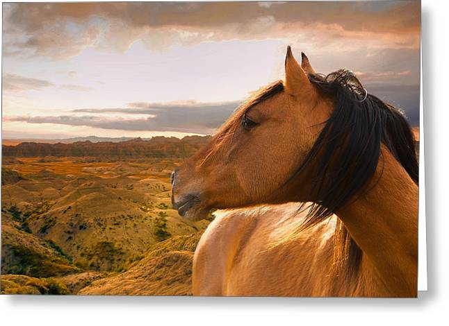 Ron Mcginnis Photography Greeting Cards - Watching the Backtrail Greeting Card by Ron  McGinnis
