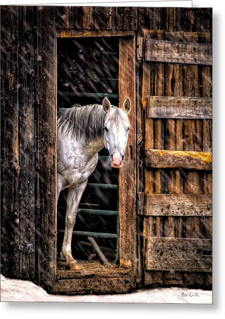 Mare Greeting Cards - Watching the snow fall Greeting Card by Bob Orsillo