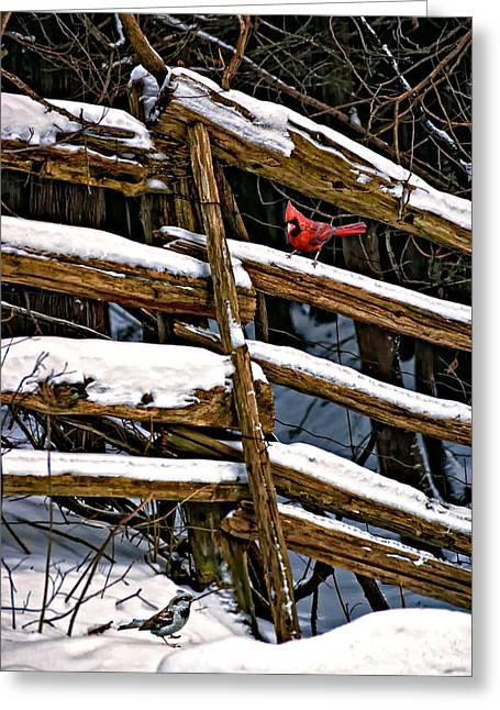 Cedar Fence Greeting Cards - Watching You Greeting Card by Steve Harrington